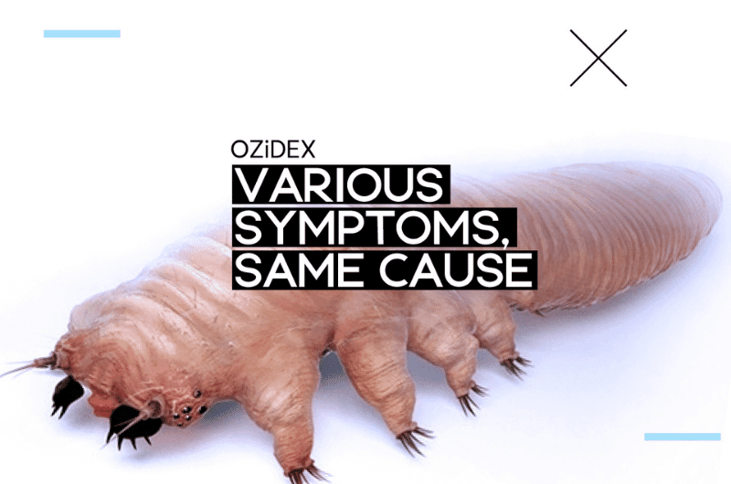 An Overview to Demodex Mites Treatment